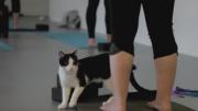 Purrfect Yoga Classes